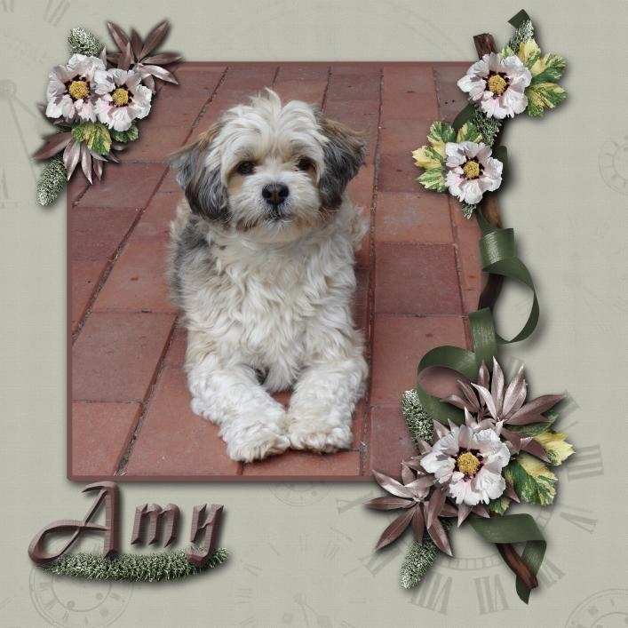 Amy, min mors hund